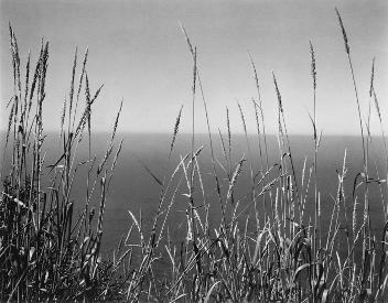 Weston, Grass Against Sea